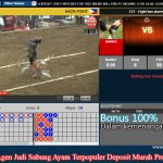 BONUS 20% dan BONUS 100% Permainan Sabung Ayam S128 Online