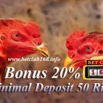 Agen Sabung Ayam Modal 50 Ribu Bonus 20%
