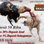 Bonus 100% Situs Sabung Ayam Online Deposit 50 Ribu