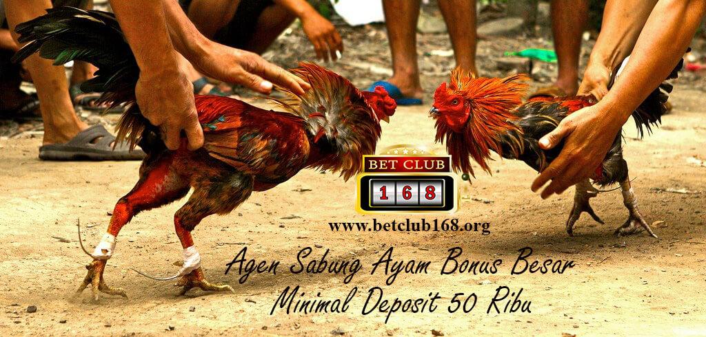 Melihat Ketangguhan Dalam Judi Sabung Ayam Online Terbaik