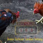 Permainan Adu Ayam S128 dan SV388 Keuntungan Terbesar