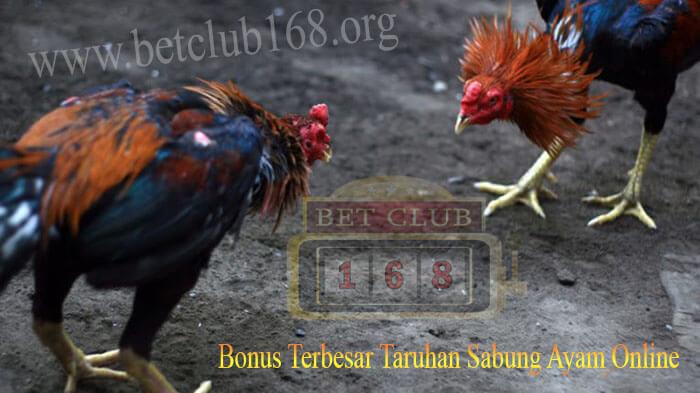 Mendapatkan Keuntungan Bonus Besar Bersama Agen Judi Sabung Ayam Terpopuler