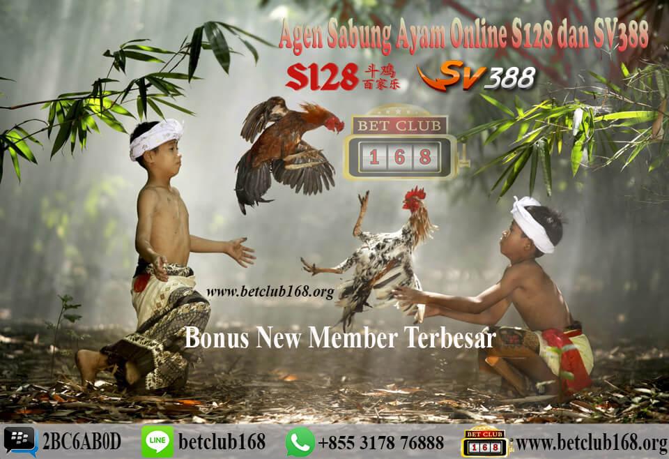 Agen Sabung Ayam Online Deposit Murah 50 Ribu Bonus New Member Terbesar