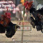 Mendapatkan Bonus Besar Taruhan Sabung Ayam Online