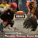 Judi Sabung Ayam Online Terkenal Kemenangan Bonus dan Keuangan Besar