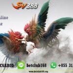 Taruhan Judi Sabung Ayam Online Terpopuler Bonus Deposit