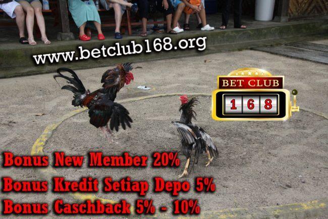 Agen Sabung Ayam Online Terpopuler Bonus Deposit Terbesar