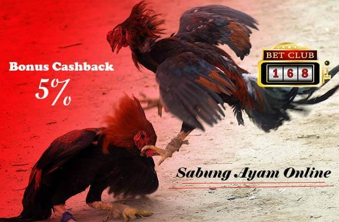 Agen Sabung Ayam Bonus Cashback 2018 Setiap Minggu