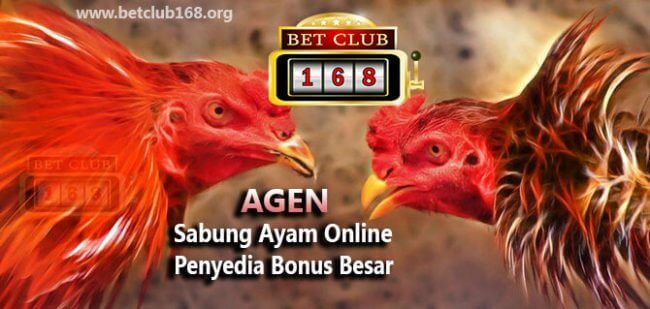 Agen Taruhan Sabung Ayam Penyedia Bonus Besar