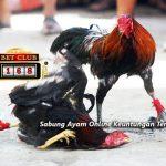 Situs Sabung Ayam Online Teraman Bonus Deposit
