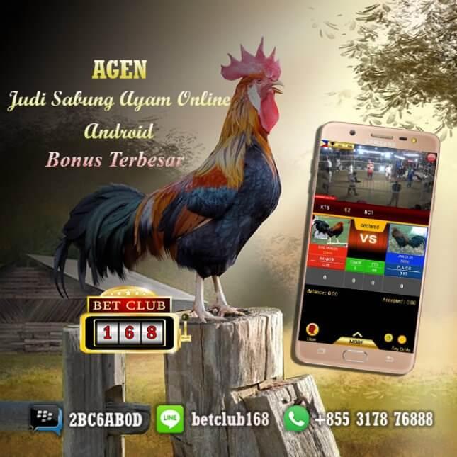 Judi Sabung Ayam Online Terpopuler