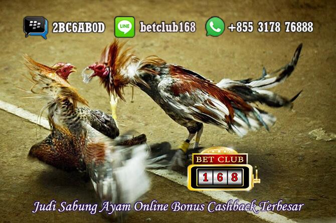 Sabung Ayam Online Bonus Cashback