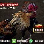 Situs Sabung Ayam Online Bonus 20% 2018