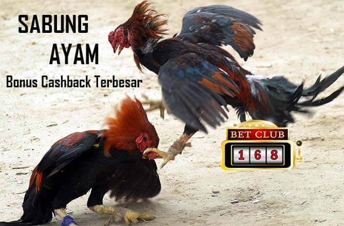 Judi Sabung Ayam Online Bonus Cashback