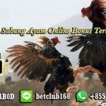 Judi Sabung Ayam Online Bonus Terbesar