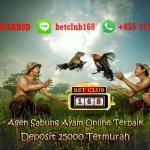 Sabung Ayam Online Terbaik Deposit 25000