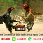 25 Ribu Judi Sabung Ayam
