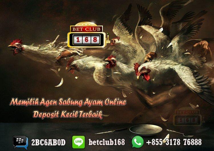 Agen Sabung Ayam Online Deposit Kecil