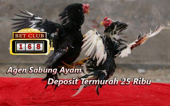 Sabung Ayam Deposit Termurah