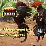 Sabung Ayam Live Online Terbaik