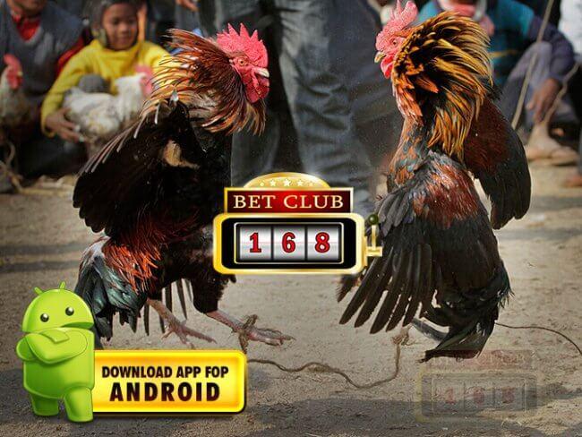 Adu Ayam Online Terkenal Android Bonus