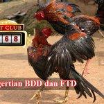 BDD dan FTD Sabung Ayam
