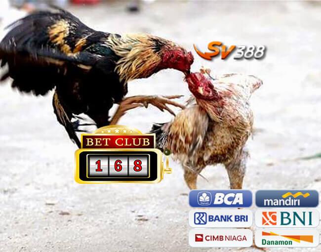 Keuntungan Bermain Judi Tarung Ayam Online SV388