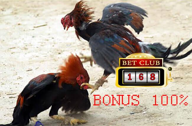 Promo Bonus 100% Taruhan Adu Ayam Online Uang Asli