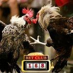 Taruhan Laga Ayam Untung Terbesar 2019
